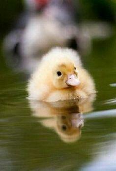 Cute#duck