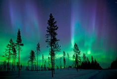 Beautiful northern lights over forest of city Kiruna in Sweden. Photo by:Antony Spencer