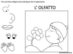 olfatto.png (1517×1131)