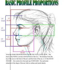 profile proportions of the face female - Google Search