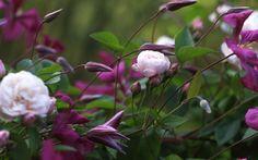 paradis express: Arne Maynard Garden Design