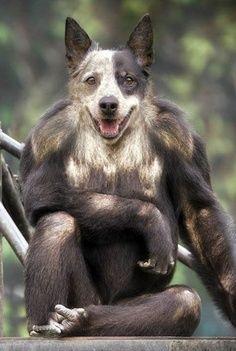 Photoshop dogs... so disturbing!!