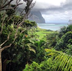 ◇ W O N D E R ◇ From the jungle to the sea, imagine experiencing all our World Heritage listed island has to offer. Click the image to book your luxury Lord Howe Island getaway. Image by Darcie Bellanto.