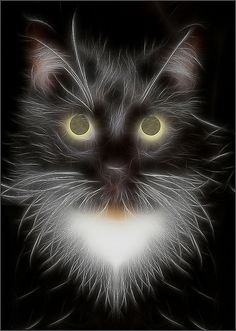 Black Cat Fractalius by  Bahman Farzad,