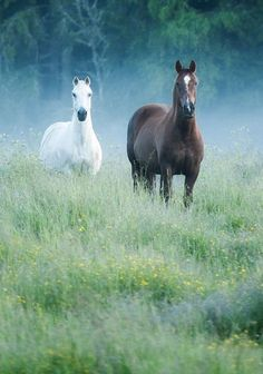 Horses are such beautiful animals, just touching them makes smile All The Pretty Horses, Beautiful Horses, Animals Beautiful, Beautiful Couple, Majestic Horse, Majestic Animals, Horse Photos, Horse Pictures, Zebras