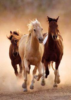 pinturas hiperrealista de animales - Buscar con Google