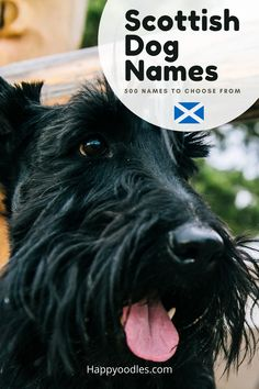 Choosing a name for your dog is an important first step in dog ownership. You might want to find a name that is unique. One way to find a unique dog name is to choose a name from another country. Some countries lend themselves to unique names more than others. Scotland is one of those countries. To help you find the perfect Scottish dog name we have put together a list of more than 500 Scottish dog names to choose from. (#Scottishdognames, #dognames, #puppynames, #uniquenames) Puppy Names, Dog Names, All Dogs, Best Dogs, Unique Names, Types Of Dogs, Scottish Terrier, Terrier Dogs, Dog Lover Gifts