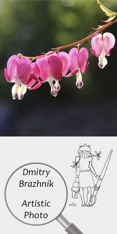 Dmitry Brazhnik   Artistic Photo   Printable   Design   Interior   Instant Download   Pink Flowers Photography (fragment)   Full Color Summer Garden   №D-1001