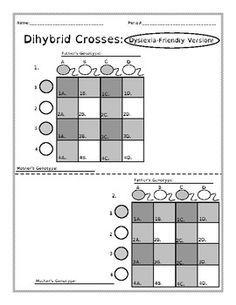 Dihybrid Crosses (F1 Dihybrid Cross Worksheet)   Worksheets ...