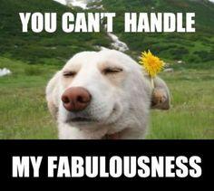 Fabulousness
