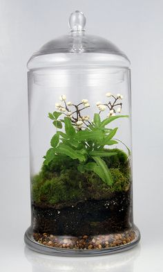 terrarium with tiny