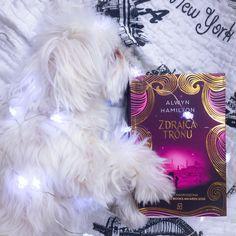 #dog #maltese #alwynhamilton #bookstagram #books #book #zdrajcatronj #photography