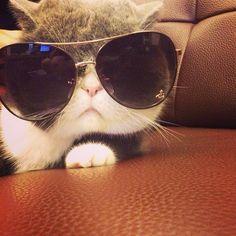 Cool #cat  =^..^= www.zazzle.com/kittyprettygifts