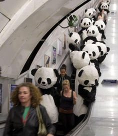 PANDAS!.....in the City