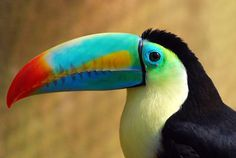 Toucan!  (sudden craving for Froot Loops)  :)    Via Souls Of My Shoes on tumblr.com