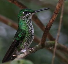 Resting Hummingbird by UniquePhotoArts