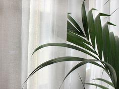 Dandelion, Plant Leaves, Fabric, Plants, Collection, Ideas, Tejido, Tela, Dandelions