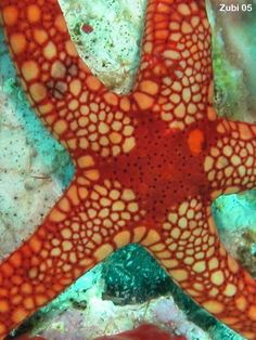 the life of a brittle starfish essay