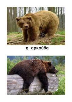 ζώα σε χειμερία νάρκη Brown Bear, School Projects, Activities, Bears, Animals, Winter Time, Animales, Animaux, Animal