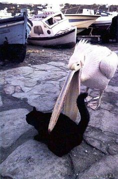 I would give anything to know what's going through that pelican's mind...
