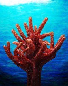 Guido Daniele - Corals