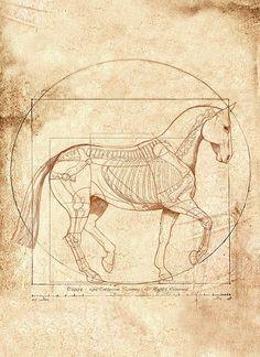 DaVinci Equine Drawings | da Vinci Horse in Piaffe Painting