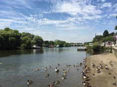 Walking along the Thames in Richmond, feeding the ducks and enjoying a lovely lunch on the river!