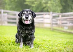 As your companion animal gets older, there is a high chance they can develop arthritis that can be extremely painful for them. As more people continue the shift to natural wellness products, Emisha's dog snacks and oil tincture are ideal choices to treat pain for the family's animals. #PetCBD #CBDforpets #pethealth #DogHealth #DogCBD www.EmishaWellness.com Dog Snacks, Dog Treats, Dog Safety, Pet Loss, Losing A Pet, New Puppy, Dog Training Tips, All Dogs, Dog Owners