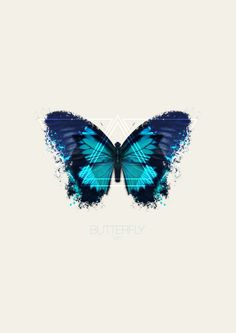 Butterfly N° 1 #don