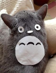 Make a kitty into your very own Totoro!