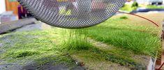Vorbildgerecht stehendes Gras