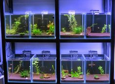 All+about+betta+fish:+Partitioned+Betta+fish+tank+setup