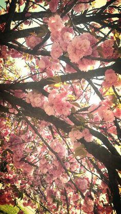 KRAZY WORLD OF ELYMANIA: Primavera stagione puerile proprio perchè è come i...