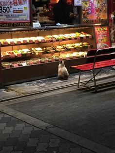 cat::::I have seen many pictures of this particular cat doing this. Hope someone fed him