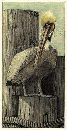 Down at the Dock    Pelican  Digital print from original pencil drawing by Rebekah Hughes