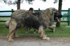 Und dieser Hund, mit dem Du Dich niemals anlegen solltest.
