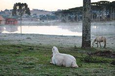 Frio ao amanhecer de Lages, na Serra Catarinense, ao amanhecer desta quinta-feira, 28 de agosto de 2014. A temperatura na cidade chegou a -1ºC, mas a mínima no Estado foi de -6,8ºC, em Urupema:imagem 20