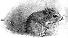 """A Nest for Celeste: A Story About Art, Inspiration, and the Meaning of Home"",  a book by Henry Cole, 2010  ~ illustrated with brown pencil drawings / A story of an orphaned mouse who becomes friends with  Joseph, a teenage apprentice to Audubon who helps with the master's painting. Joseph carries Celeste around in his pocket & she sees for herself just how wild animals & birds are treated for the sake of art."