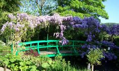 Wisteria in Monets garden