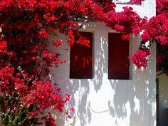 https://flic.kr/p/8xgKGq | Facade and bougainvillea | Facade with red shutters and red bougainvillea. Chora, Folegandros island, Cyclades, Greece