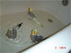 wish my bird did this all she does when I put her in the bath is squawk and try to get herself out