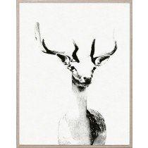 Tylinek Deer