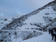 Cedars - Lebanon / Snowshoeing