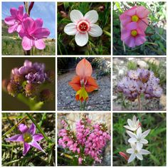 Floral wonders in the Overberg