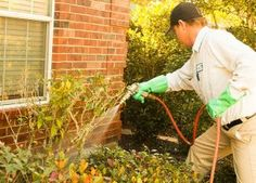 Preventive Pest Control is a renown team of pest control experts that provide the highest quality of pest treatment plans and pest control services to enforce an insect and rodent free environment for residential homeowners and commercial businesses located in Houston.