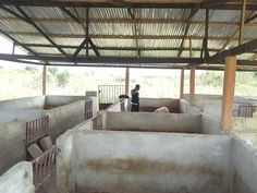 Pig Farming Pig Farming And Other Business Opportunities In Minimalist House Design, Minimalist Home, Pig Shelter, Philippines House Design, Farm Shed, Philippine Houses, Pig Pen, Pig Farming, Chickens Backyard
