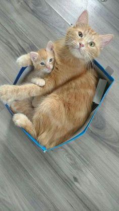 Orange tabby mom & baby.