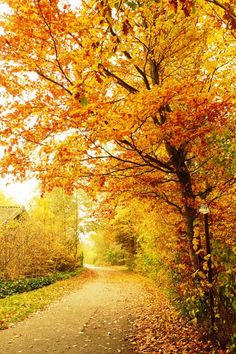 Love Fall ~ when the leaves have turned to all the shades of orange, gold & red.