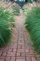 Ornamental grasses lining both sides of brick walkway in garden, Pennisetum alopecuroides mirrored on each side to form an allee
