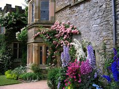 delphinium and climbing roses